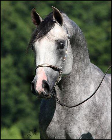 Quiets Wild Horses Picone_SasakisSamurai_2004gs_Sasaki%20x%20JaleasET